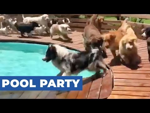 Ass at the pool in bikinis from YouTube · Duration:  1 minutes 28 seconds