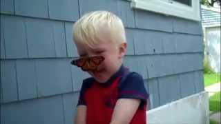 Butterfly Lands On Little Boys Face (HD)