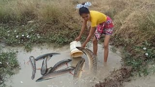 Amazing fishing at Pailin - Net fishing in Cambodia - How to Catches fish (Part 19)