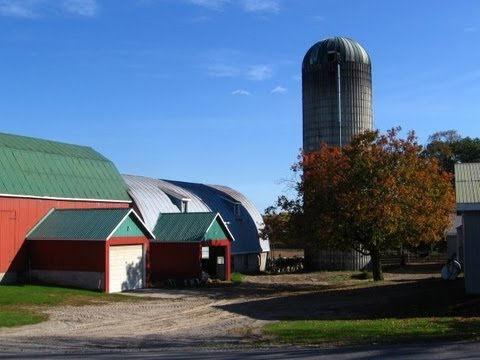 Dairy Farming - Sine Farms