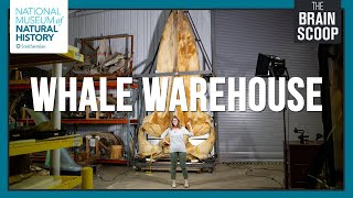 Inside the Whale Warehouse!