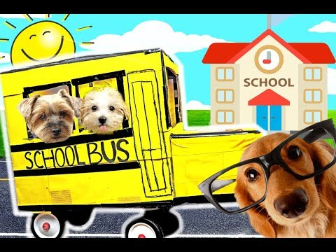 PUPPY'S FIRST DAY AT SCHOOL!! BOX FORT SCHOOL BUS 📓🎓