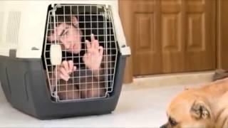 Dog Training Secret