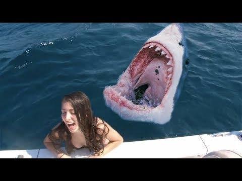 彼女はサメのタンクに落ちた (ʘ_ʘ)