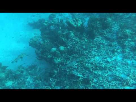 Blobfish & Lion fish