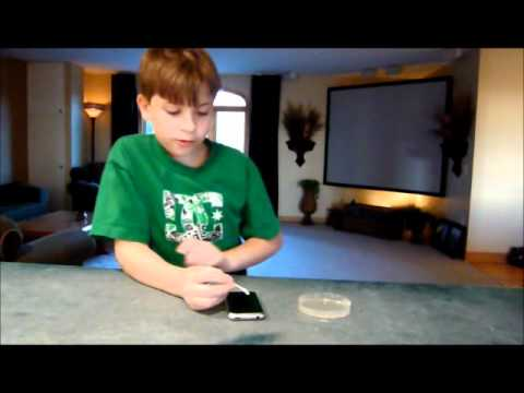 Science Project - Growing Bacteria In A Petri Dish