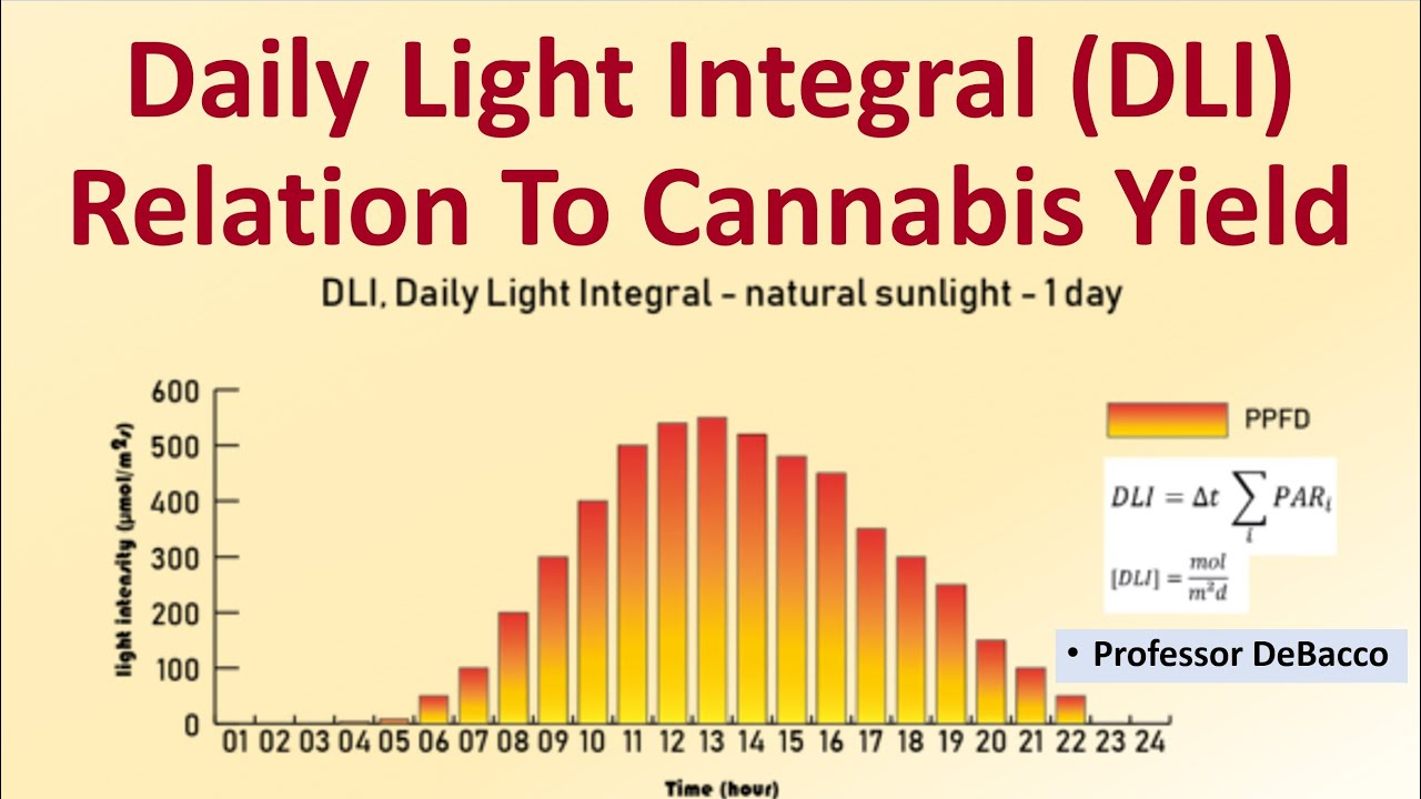 Download Daily Light Integral DLI Relation To Cannabis Yield