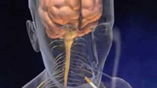 Dohányzás- animáció(Animáció a dohányzásról., 2008-09-15T14:14:22.000Z)