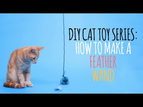 Thumbnail for Cat Video DIY Cat Toys - How to Make a Feather Wand