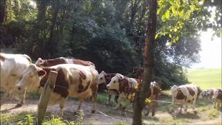 Ferme de paul EP1 On rentre les vache Partie1