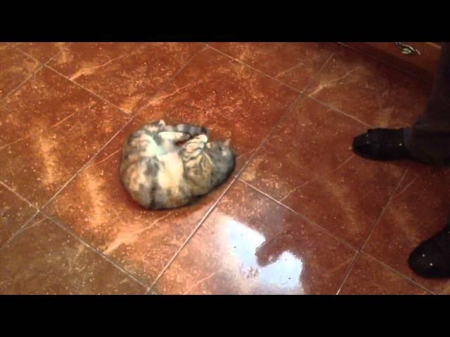 Кошка и оливки