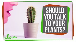 Should You Talk to Your Plants to Help Them Grow?