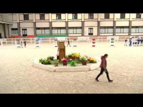 22.09.2016.Шоу молодых лошадей. Лошади 2015, 2014, 2013 г.р.