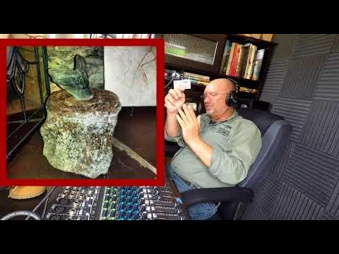 Megalodon - Does it still exist?  Podcast #130