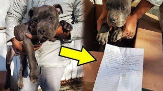 Мальчик оставил на пороге приюта щенка с запиской, прочитав которую волонтеры были тронуты до глубин