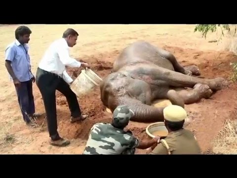 Treatment continues to fainted wild elephant at Coimbatore| NH9 News