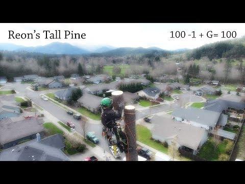 Reon's Tall Pine