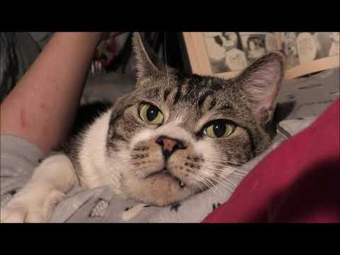 リキちゃんが一番好きな時間☆パパの腕枕で添い寝!まったりする甘えん坊な猫がかわいい【リキちゃんねる 猫動画】Cat video キジトラ猫との暮らし