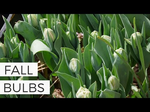 July - Time To Buy Fall Flower Bulbs!