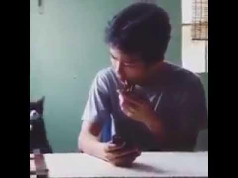 cat iphone ringtone