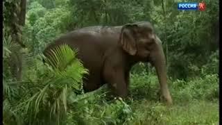 Дикая природа островов Индонезии  1 я серия / Видео
