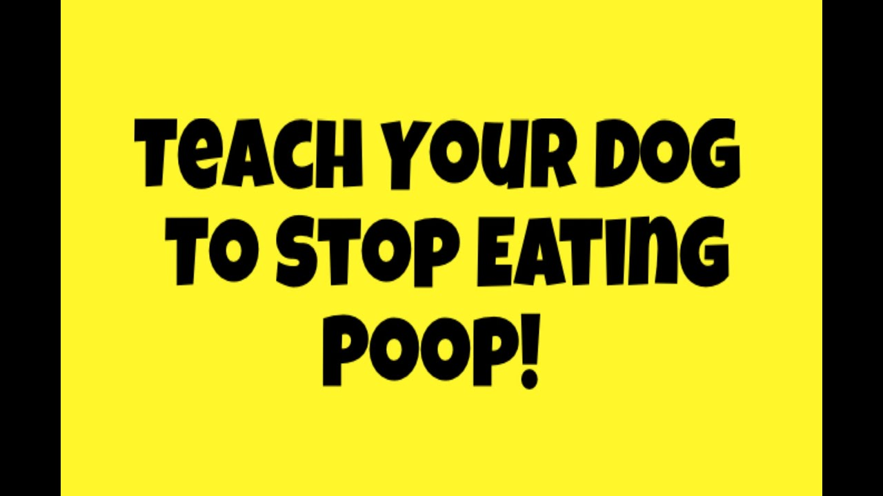 Stop A Dog From Eating Feces Naturally