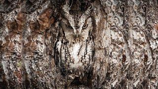 छिपने की कला में माहिर हैं ये जीव, सामने होकर भी नहीं दिखते| The animals that are almost invisible