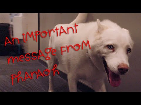 An important message from Pharaoh