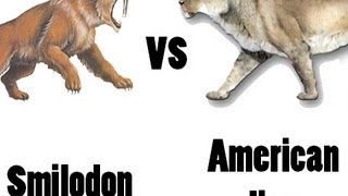 American Lion vs Sabre-Toothed Cat - Who would win in a fight?(Two of the largest felines ever to live face off in an ultimate battle., 2013-05-28T11:20:49.000Z)