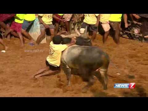 Madurai Alanganallur Jallikattu 3   10-02-2017   News7 Tamil