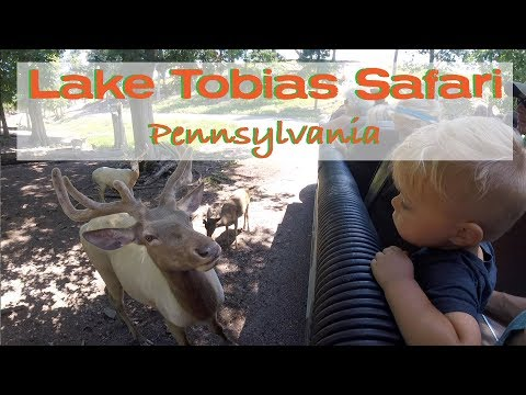 SAFARI TOUR At Lake Tobias Wildlife Park// Pennsylvania- Adventure 9