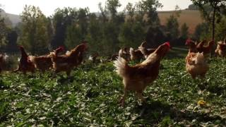 Bande-annonce Voyons voir : Flashons sur nos éleveurs !