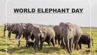 World Elephant Day 2015