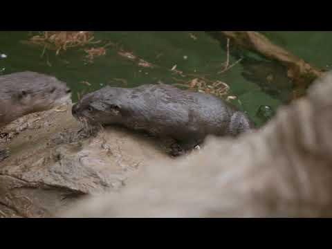River Otter 'Pupdate'