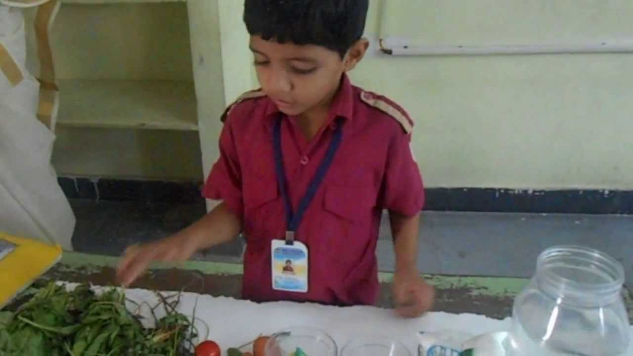Science Fair Project LKG Vitamins - YouTube