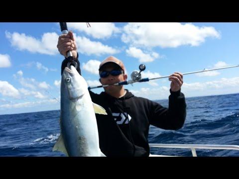 Sydney Kingfish offshore