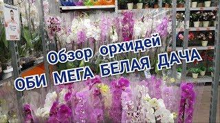 видео: Обзор орхидей ОБИ МЕГА Белая дача