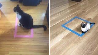 Katzen im Rechteck: Wetten, dass Ihre Katze das auch macht?