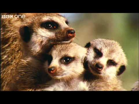 What A Wonderful World With David Attenborough -- BBC One [FULL HD]
