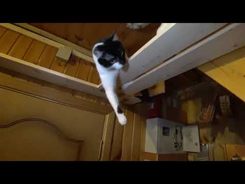 Кошки игровой уголок для кошки своими руками