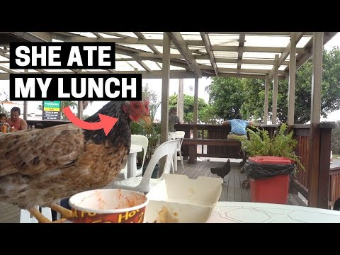 COOK ISLANDS FOOD | Where do locals eat in Rarotonga, Cook Islands?