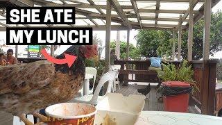 COOK ISLANDS FOOD   Where do locals eat in Rarotonga, Cook Islands?