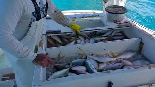 Yellowtail snapper fishing at the keys.