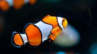 видео Типы морских аквариумов