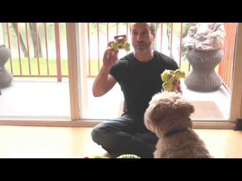 KONG AirDog Squeak Dog Toys Make Dogs Smarter - The PetMan Shows You How