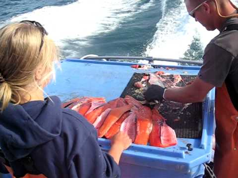 Super fast fish fillet in Alaska