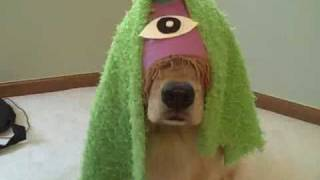 "Funny Golden Retriever Dogs Star in ""Purple People Eater"""