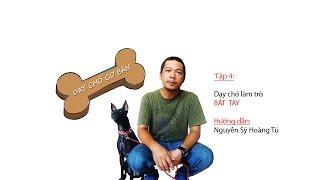 DẠY CHÓ CƠ BẢN: TẬP 4: Tập chó nuôi làm trò bắt tay.