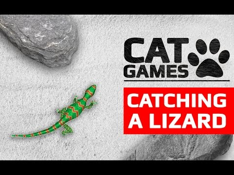 CAT GAMES – CATCHING A LIZARD 60FPS (Entertainment video for cats to watch)