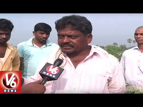 Special Report On Telangana Cotton Farmers Problems | Ground Report | V6 News